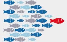 Leading Fish