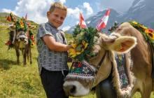 Schweizer Alm - Kuh und Hütejunge